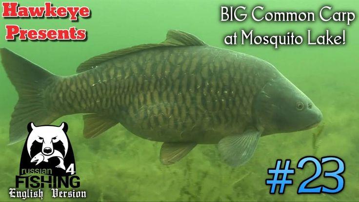 Russian Fishing 4 | ENGLISH | #23 - BIG Common Carp at Mosquito Lake!