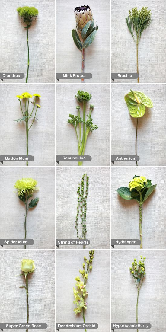 Flowers guide. See more colors here http://www.weddingchicks.com/category/flower-guide/