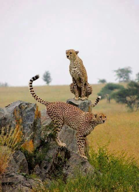 South Africa isn't just beautiful, it is achingly beautiful....                                                                                                                                                      More