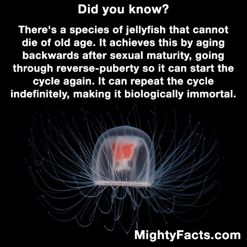 Immortal Jellyfish.