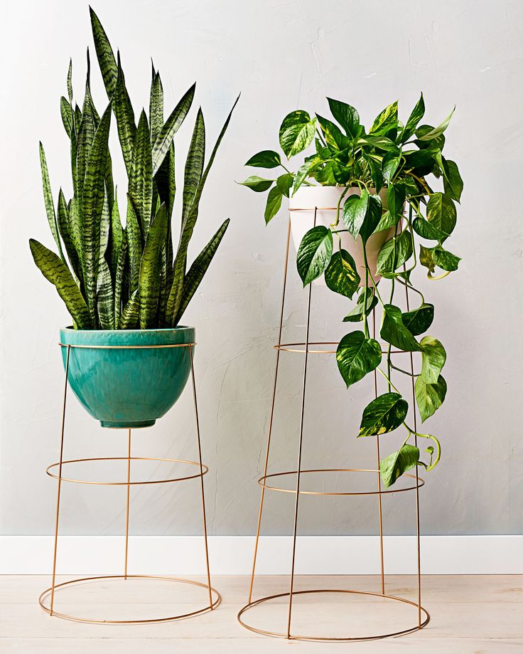 Tomato Cage Plant Stand | Martha Stewart Living — A brand new use for a garden staple.