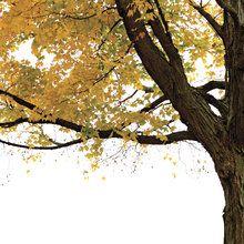 Fototapeten, Tapeten und Bilder – Bestellen Sie online bei Photowall