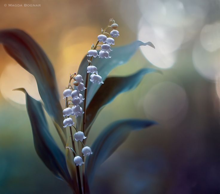 White Pearls by Magda  Bognar on 500px