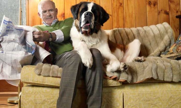 8 ways to know if your dog loves you  My dog looooovvvveeeessss me