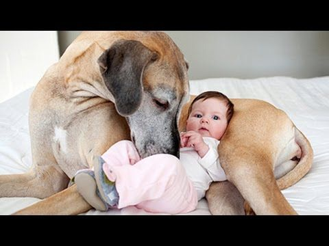 'Cats and Dogs Are the Best Babysitters' Compilation 2015 - FunnyTV - YouTube