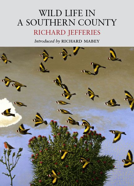 Wild Life in a Southern County by Richard Jefferies, cover illustration Goldfinches (2003-4) by David Inshaw