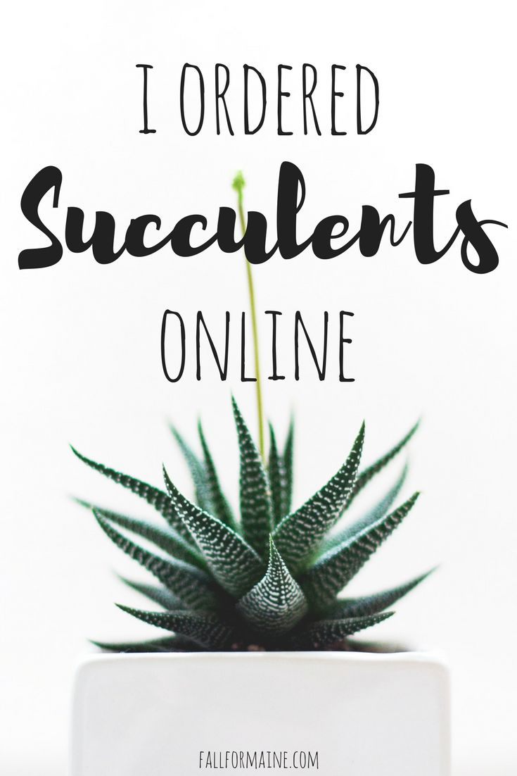I ordered #succulents online! Did they make the trip from #California to #Maine? #houseplants #plants #online #cacti #cactus