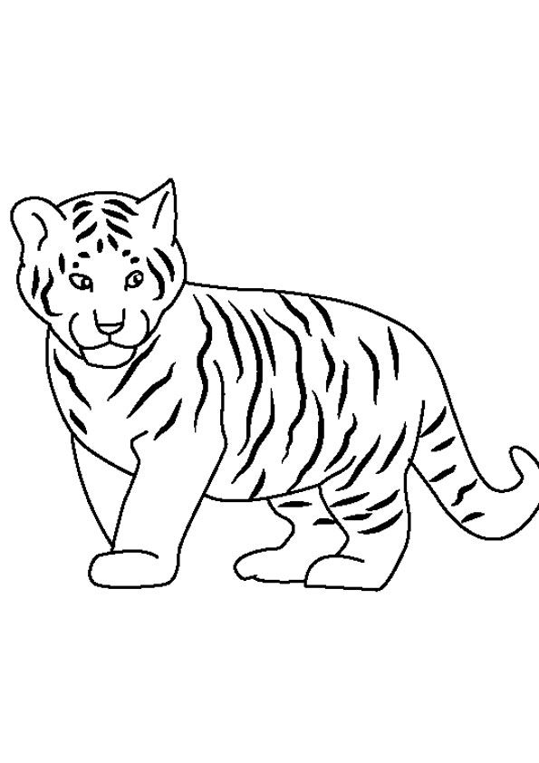 Cute Baby Tiger Coloring Page Coloring Pages Baby Tiger Cute Babies