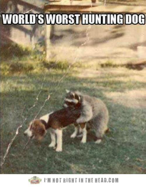 Hunting Beagle Worst Ever