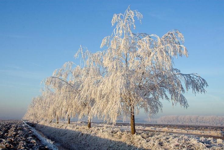 Winter in Zeeland door Arie Storm