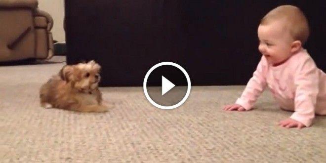 videa malé děti velcí psi - Google Search