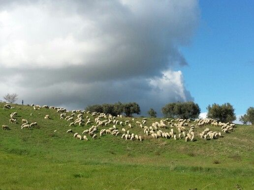 Terra d'#abruzzo #italy