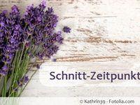 Lavendel zurückschneiden - im Frühjahr oder Herbst?