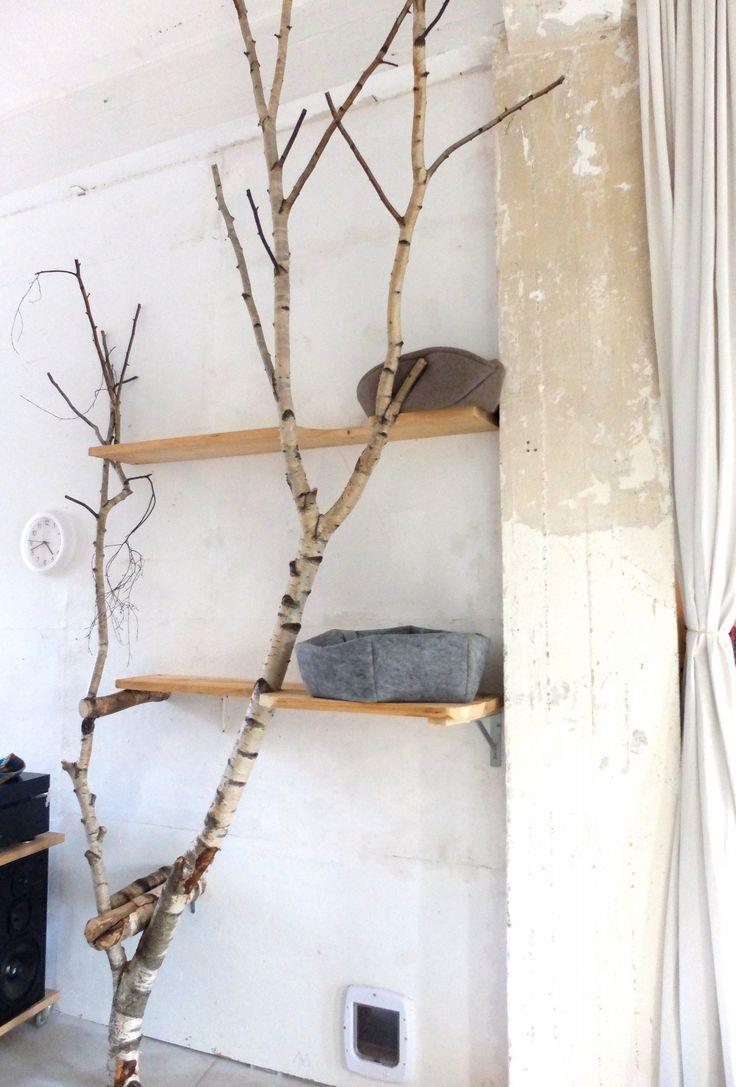 Katzenbaum von den Karolchicks
