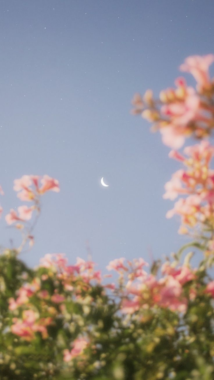 Flowers That Bloom In The Moonlight Wallpaper Iphone Android