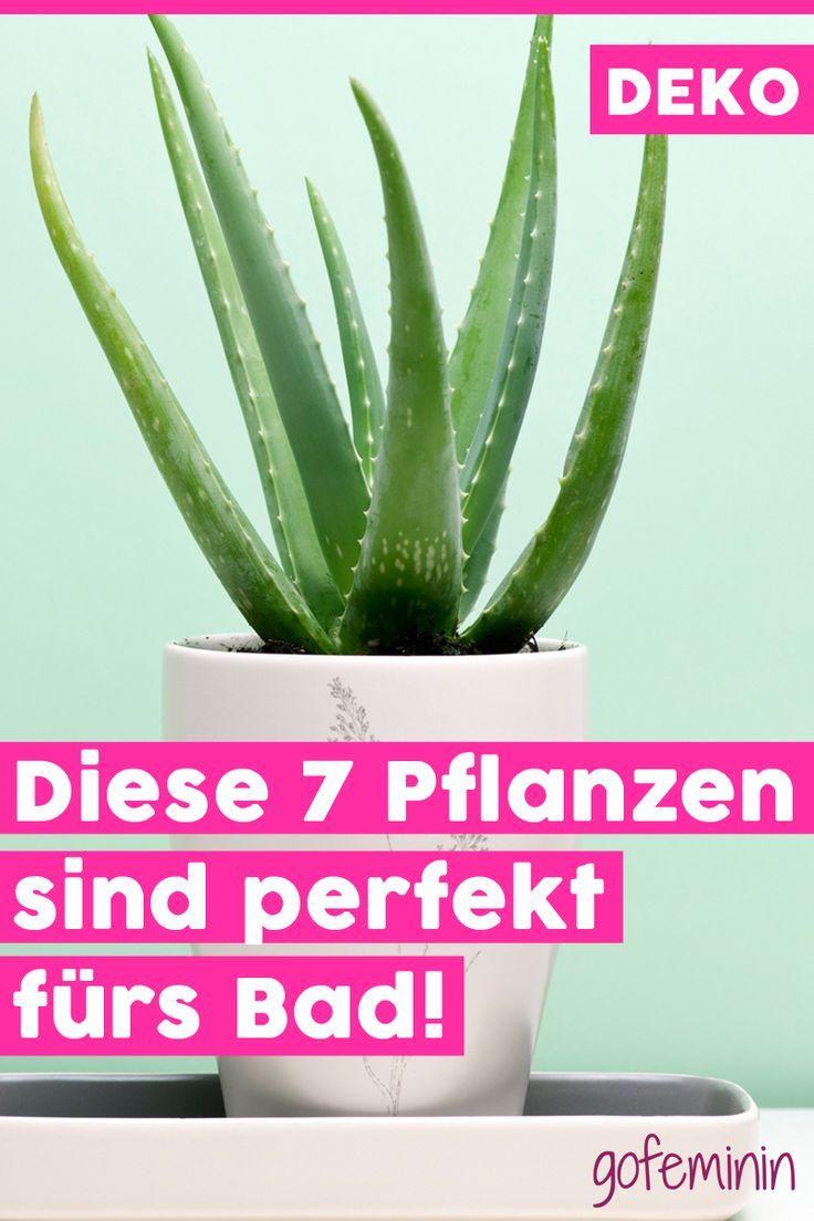 Pflanzen Machen Jeden Raum Wohnlicher Und Schoner Doch Nicht Jede Pflanze Fuh Pflanzen Im Badezimmer Pflanzideen Pflanzen
