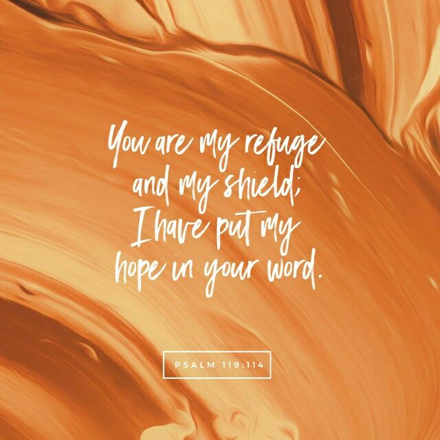 Thou art my hiding place and my shield: I hope in thy word.  Psalms 119:114 KJV