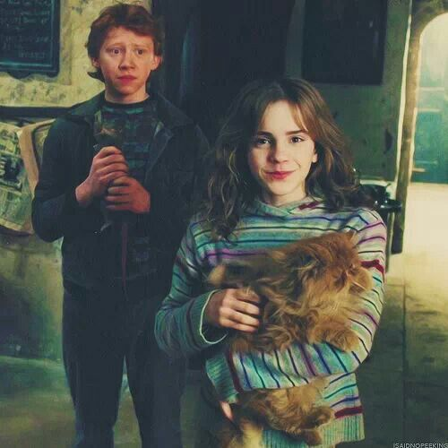harry ron and hermione meet fluffy cat