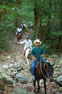 Horse Riding Tour from Cairns or Palm Cove, Australia http://www.executiveretreats.com.au/