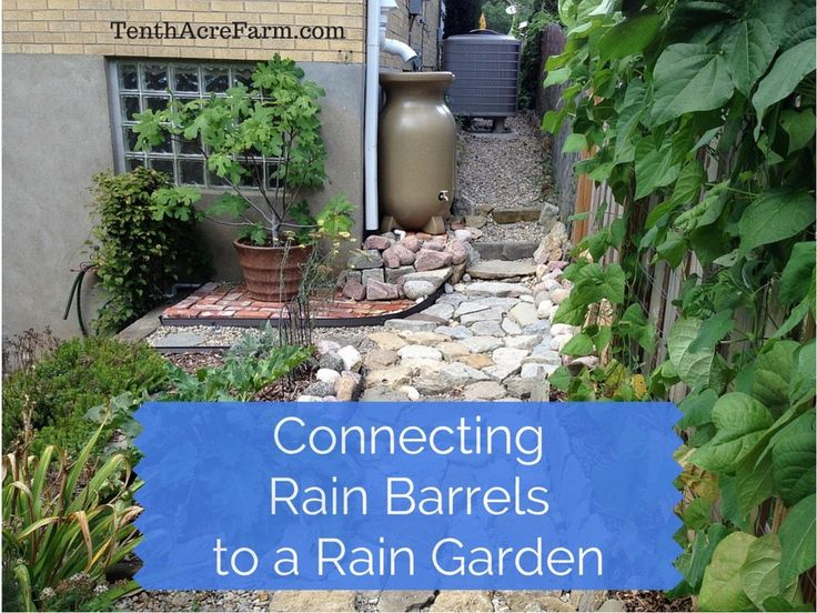Catch More Water For Irrigation By Connecting Rain Barrels To A Rain Garden.  Rainwater HarvestingRain ...