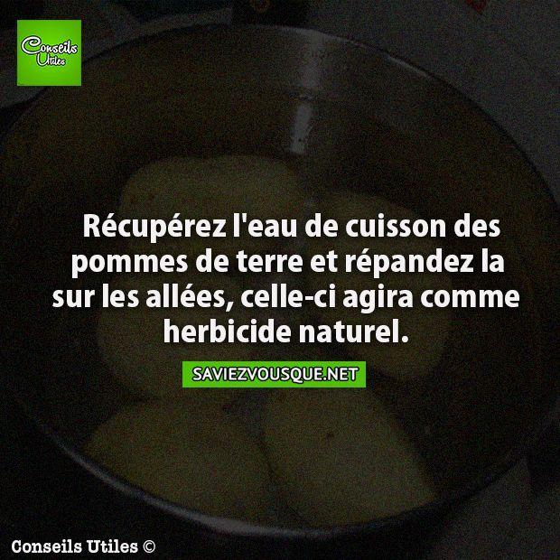 Récupérez l'eau de cuisson de pommes de terre et répandez la sur les allées, celle-ci agira comme herbicide naturel. | Saviez Vous Que?