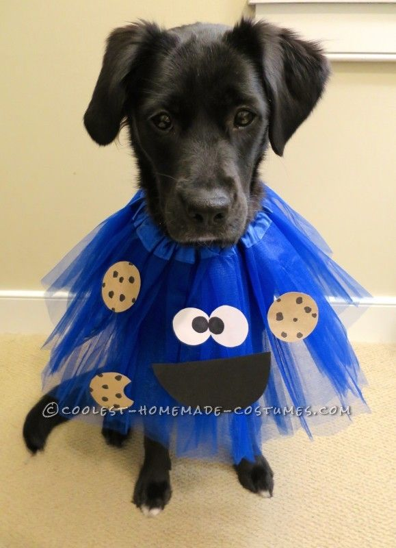 deliciously adorable cookie monster costumes for dogs - How To Make A Dog Halloween Costume