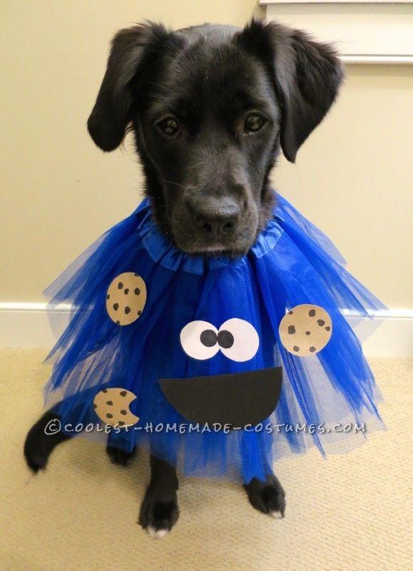 25+ bsta Dog costumes iderna p Pinterest | Gr-det ...