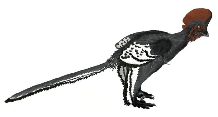 a1872bebc6299b2f3077a652aac44184 Feathered Dinosaurs Illuminate Evolution of Flight Dr. Alan Turner of Stony Broo... Dinosaurs