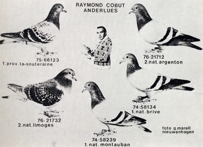 Raymond Cobut Quot History Of The Belgian Racing Pigeons