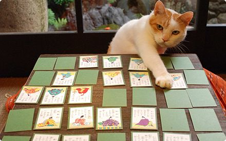 Cat to play the card.