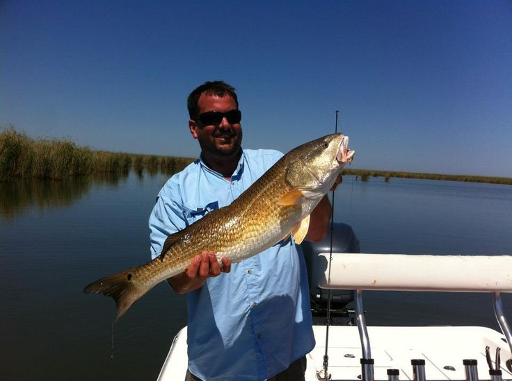 17 best images about redfish on pinterest sharks nice for How to fish for redfish