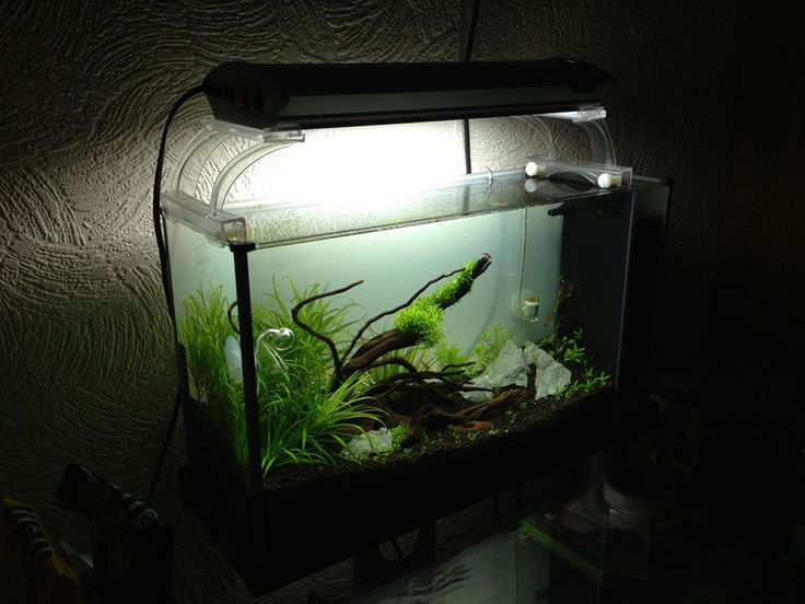 Best Fish Tank Decoration Design ~ http://www.lookmyhomes.com/amazing-fish-tank-decoration/