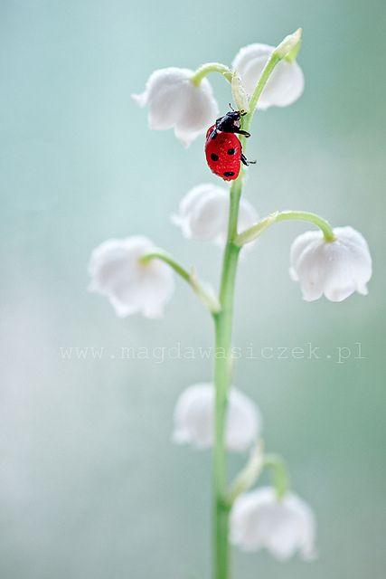 Waiting for Spring, Magda Wasiczek
