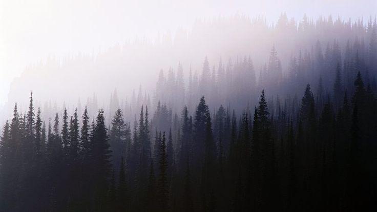 forest, Trees, Nature, Mist HD Wallpaper Desktop Background
