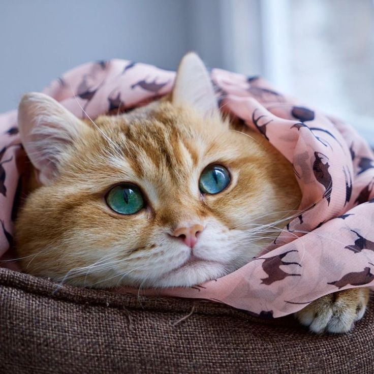 Best Pets Images On Pinterest - This photographer is celebrating stray cats through majestic portrait photographs