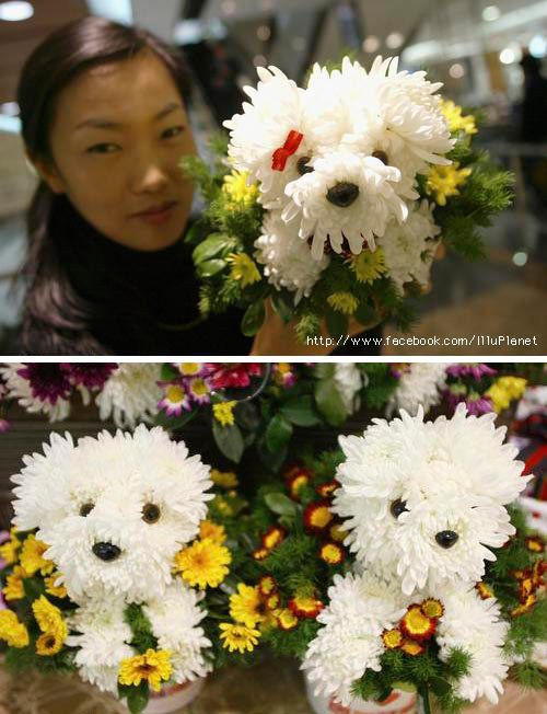 Arrange your bouquet to look like an adorable maltese puppy :D