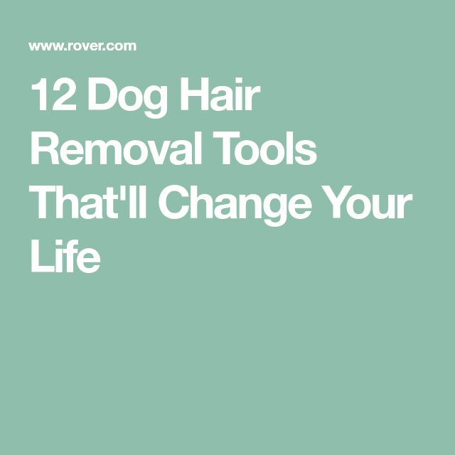 12 Dog Hair Removal Tools That'll Change Your Life