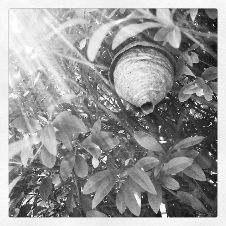 Najdeme si místo kam hned tak někdo nedohlédne... Tam postavíme něco krásného... Náš úkryt, naše místečko... Náš domov :-) #vosy #wasp #vosíúly #czechnature #příroda #nature #vysocina #vysočina