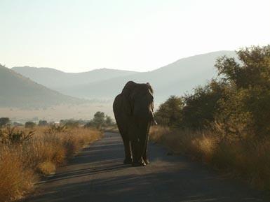 Pilanesberg national Park SA