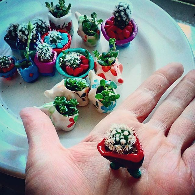 Miniature succulent pots.
