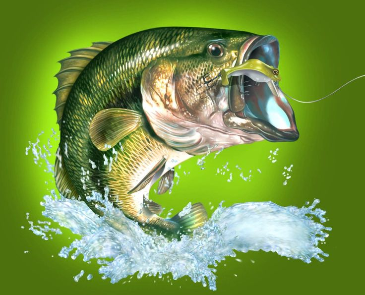 470 best fish images on pinterest pisces water animals for When is the best time to fish for bass