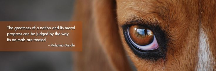 ISF Animal Sanctuary! | Ian Somerhalder Foundation...Please DONATE!
