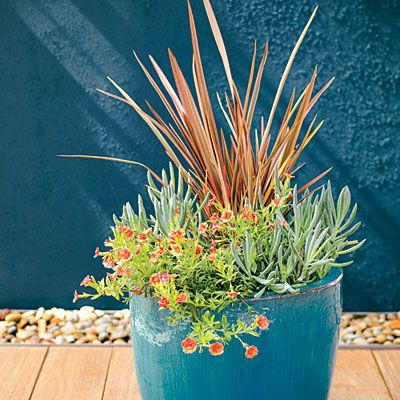 17 Best Ideas About Low Water Landscaping On Pinterest