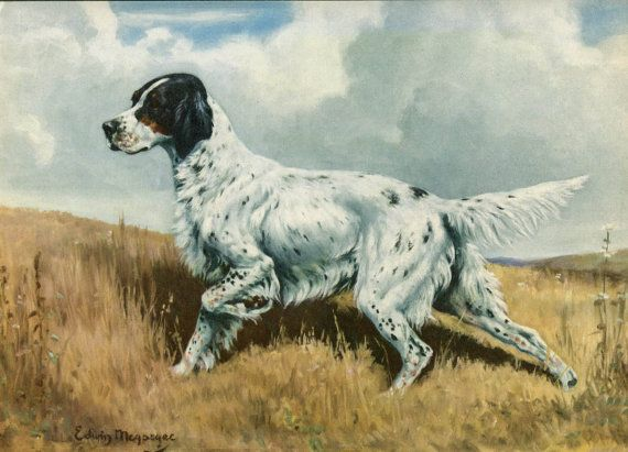 English Setter Vintage Dog Illustration - Edwin Megargee - 1940s Original Page - Hunting Dog via Etsy