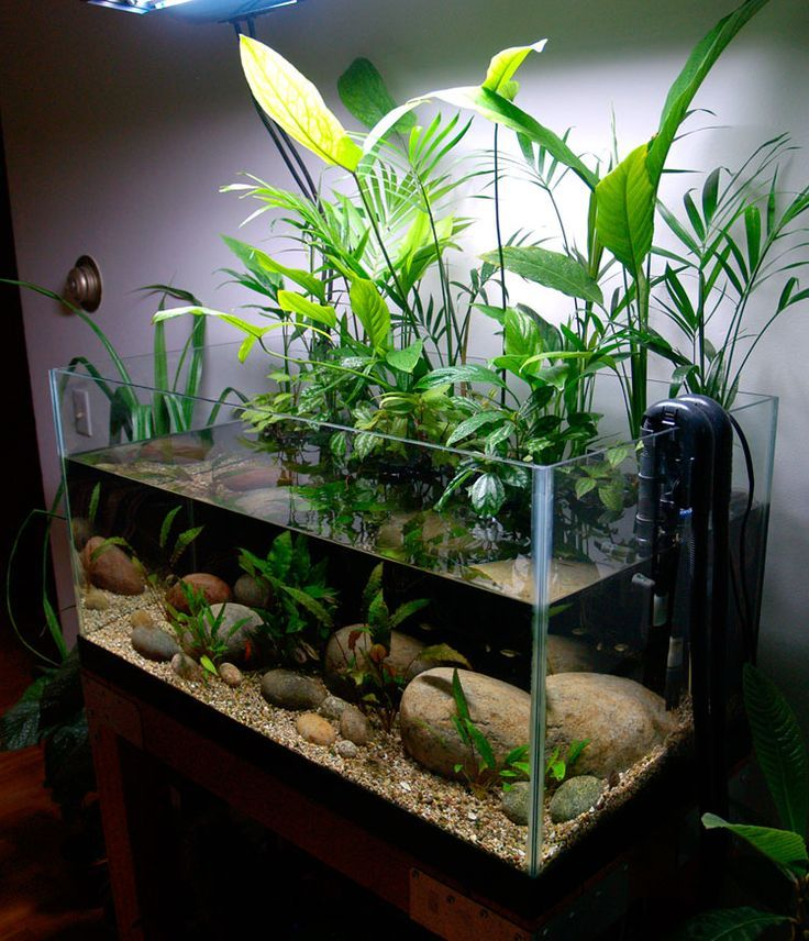 50-gallon Planted Riparium. Found on hydrophytesblog.com