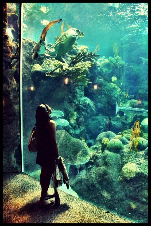 Image Result For The Florida Aquarium