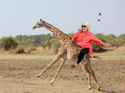 "Paula Deen riding a giraffe. | ""cause you had a bad day ..."