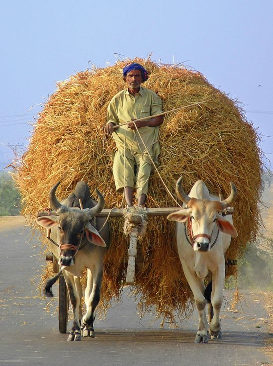 This method of carrying goods to and not more modern, but in large parts of Pakistan, it still remains very favorable .