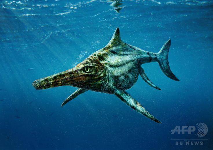英スコットランド北西部沖のスカイ島で発見された化石から新たに新種と判明した1億7000万年前の海生爬虫類「Dearcmhara shawcrossi」の想像図(2015年1月11日提供)。(c)AFP/UNIVERSITY OF EDINBURGH/TODD MARSHALL ▼17Jul2015AFP|【特集】古代生物図鑑~太古に生きた奇妙な動物たち http://www.afpbb.com/articles/-/3002031 #Dearcmhara_shawcrossi