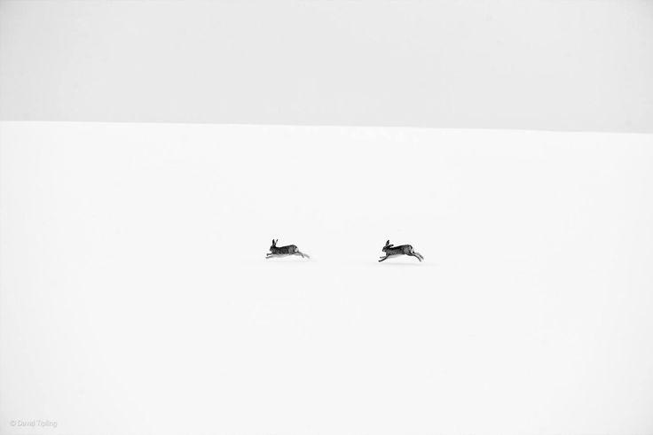 Las mejores fotos de la vida salvaje - Ciencia - abc.es